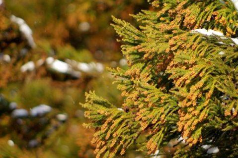 花粉症のランナー方へ!!花粉がつらい季節でもランニングを楽しむには?